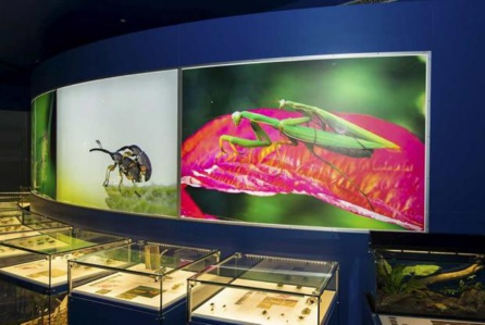 L'insectarium à Montréal
