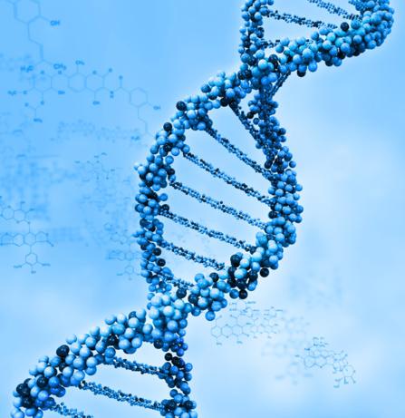 Bilan génétique