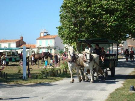 Visitez l'île d'Aix en calèche