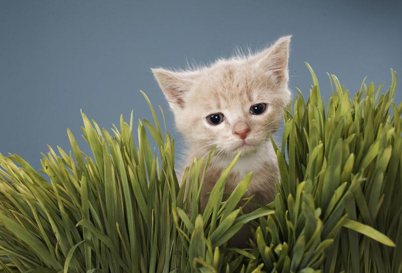 Bébé chat