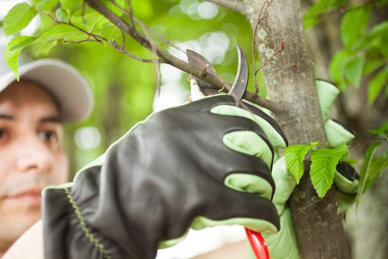 Matériel pour tailler les arbres