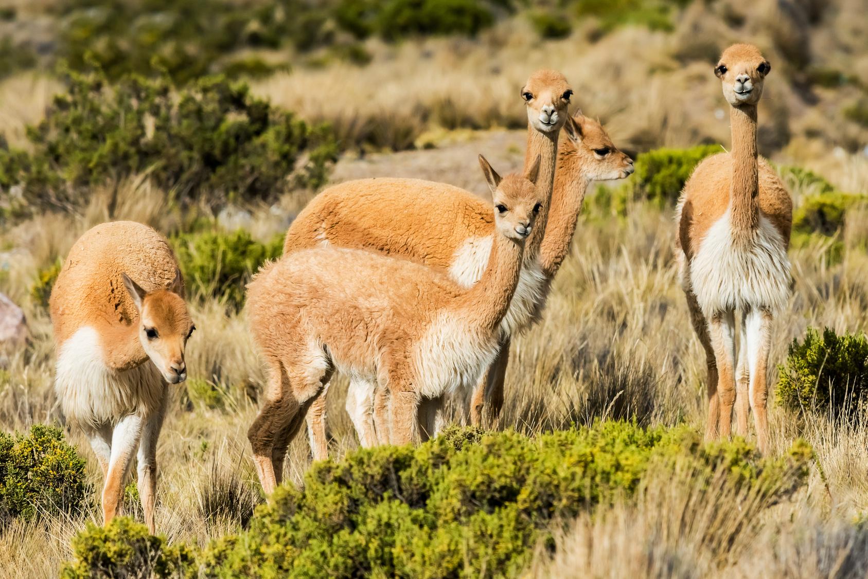 Pérou : biodiversité des espèces animales et végétales