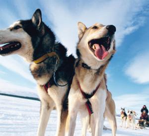 activités au québec en hiver