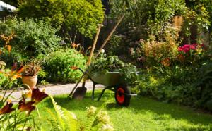 pourquoi élaguer les arbres de votre jardin