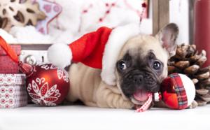 cadeau de noël : pourquoi pas un chien ?